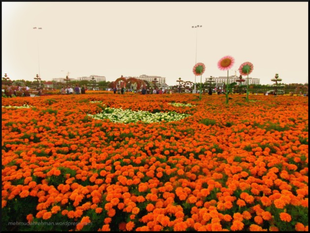 Sea of flowers... good weather too :)