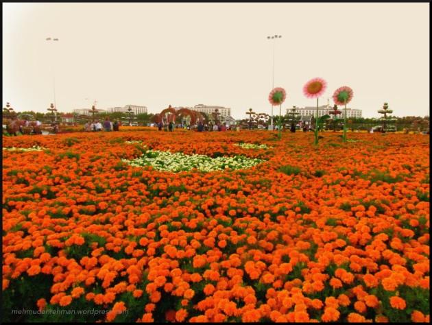 Sea of flowers... good weather too :)
